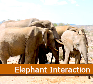 Elephant-Interaction.jpg (42 KB)